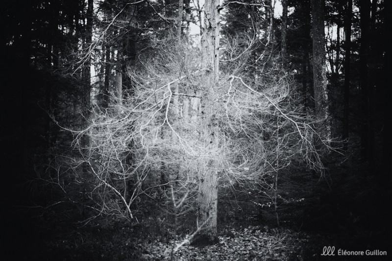 Les druides, collection d'arbres magiques